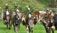 Almabtrieb Cattle Drive - Custom & Traditions / 27.09 - 30.09